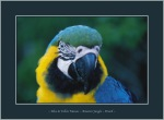 Blue&Yellow Macaw