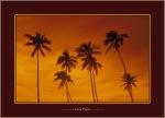 Calm Palms