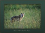 Hyena in the Grass