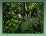 Jungle1.