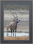 Mother to be Oryx