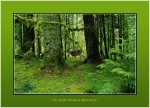 Pacific NW Rain Forest Deer