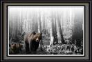 bears-001