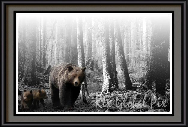 bears.001