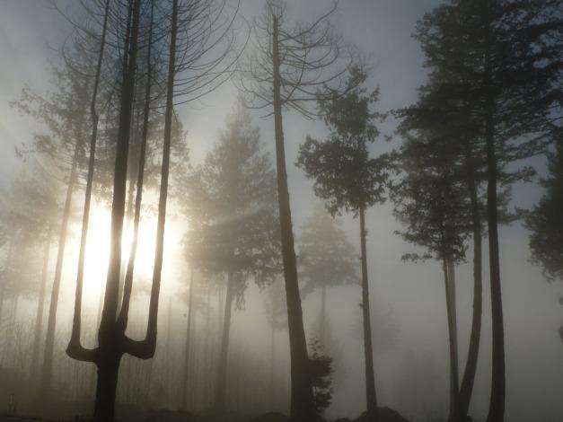 Trees3.