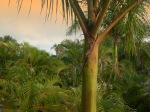 Jungle.03.