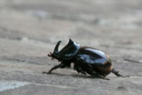 Beetle2.