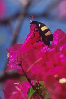 Beetle3.