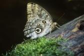 Butterfly11.