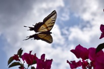 Butterfly2.