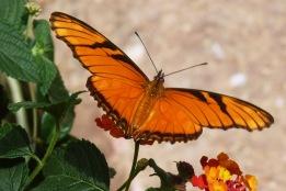 Butterfly3.