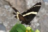 Butterfly4.