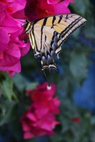 Butterfly5.