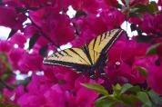 Butterfly6.