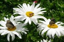 Butterfly7.