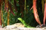 Chameleon2.