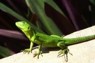 Chameleon3.