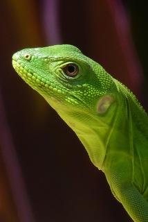 Chameleon5.