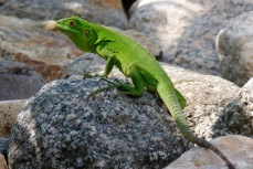 Chameleon6.