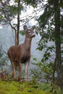 Deer3.