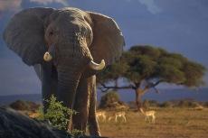 Elephant14.