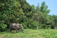 Elephant3.