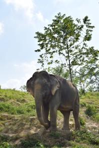 Elephant4.