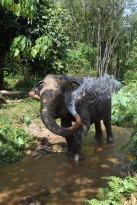 Elephant5.
