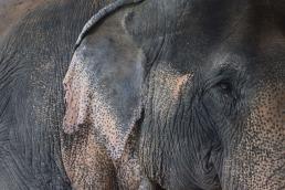 Elephant6.