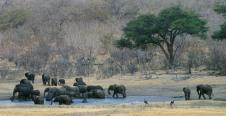 Elephants1.