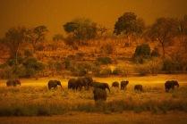 Elephants11.
