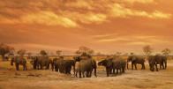 Elephants12.
