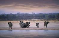 Elephants13.