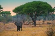 Elephants2.