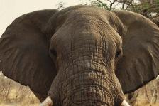 Elephants3.