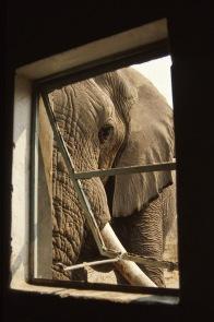 Elephants4.