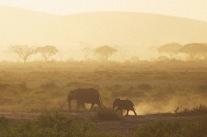 Elephants5.