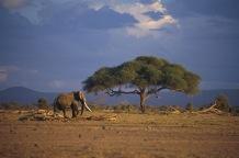 Elephants8.