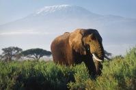 Elephants9.