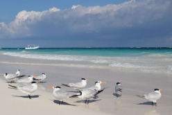 Gulls2.