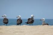 Gulls3.