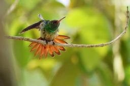 Humming Bird1.