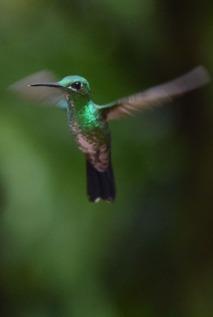 Humming Bird6.