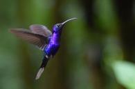Humming Bird7.