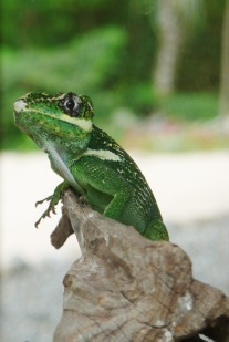 Lizard01.