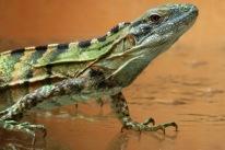Lizard03.
