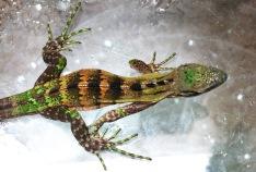 Lizard04.