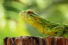 Lizard05.
