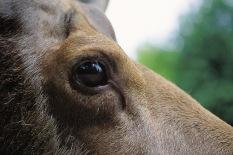 Moose3.