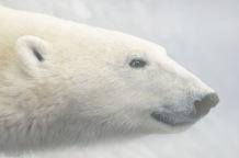 PolarBear.